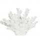 Dekoracija koralas