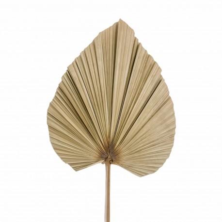 Džiovinti palmių lapai 1vnt