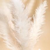 🌾Balintos FLOATY pampas smilgos vėl pas mus! 🌾 Tobulas akcentas bet kokio stiliaus interjere 🏡www.FLOATY.lt #floaty#pampas#whitwpampas#pampassmilgos#kaunas#lietuva#s#dziovintiaugalai#dziovintiaugalaiinterjere#interjeras#namai