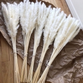 Jūsų pamėgtos FLOATY pampas mini puokštelėse po 15vnt 🌾 www.Floaty.lt  #pampasgrass#floaty#kaunas#homedecor#floatypampas#dekoras#džiovintosgėlės